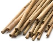 Bambupinnar 150 cm, 25-pack