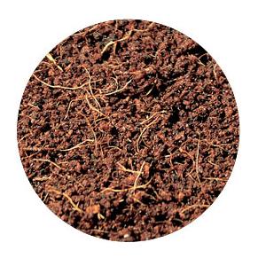 UGroCoco Plug Rhiza 24st